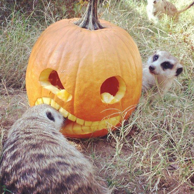 Chehaw Animal Thanksgiving