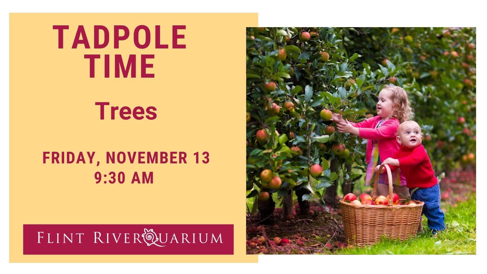 Tadpole Time: Trees