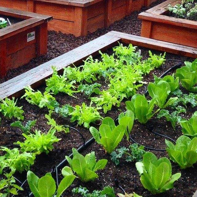 First Friday Food Gardening Basics with Farmer Fredo