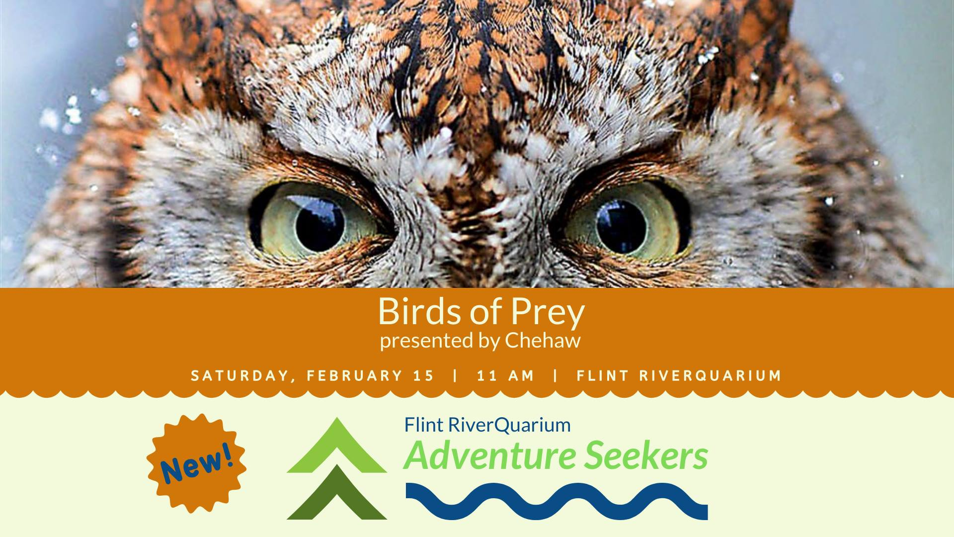 Adventure Seekers: Birds of Prey