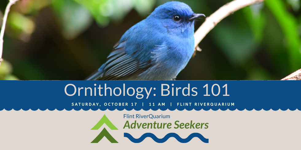 Adventure Seekers: Birds 101