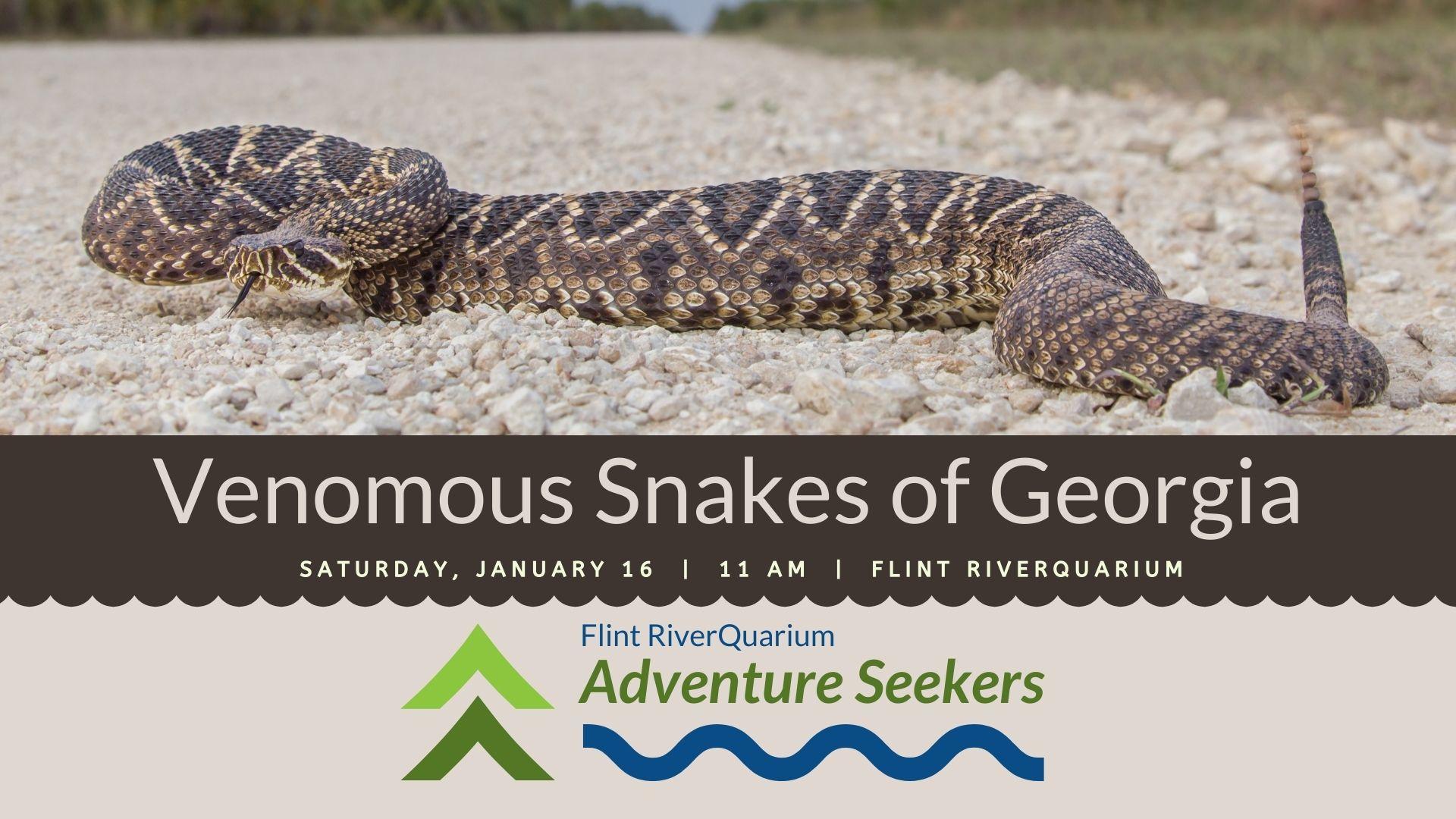 Adventure Seekers: Venomous Snakes of Georgia