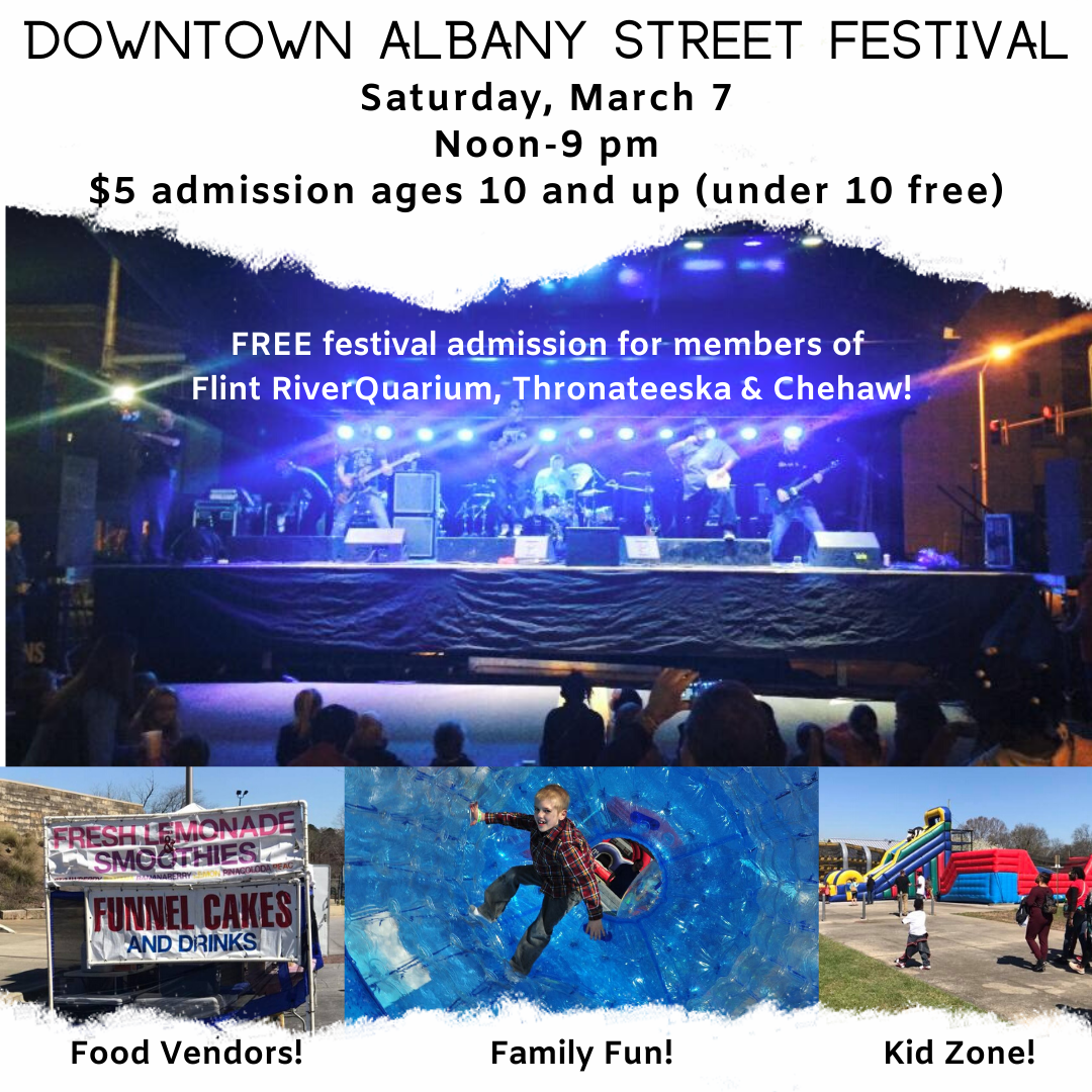 Downtown Albany Street Festival