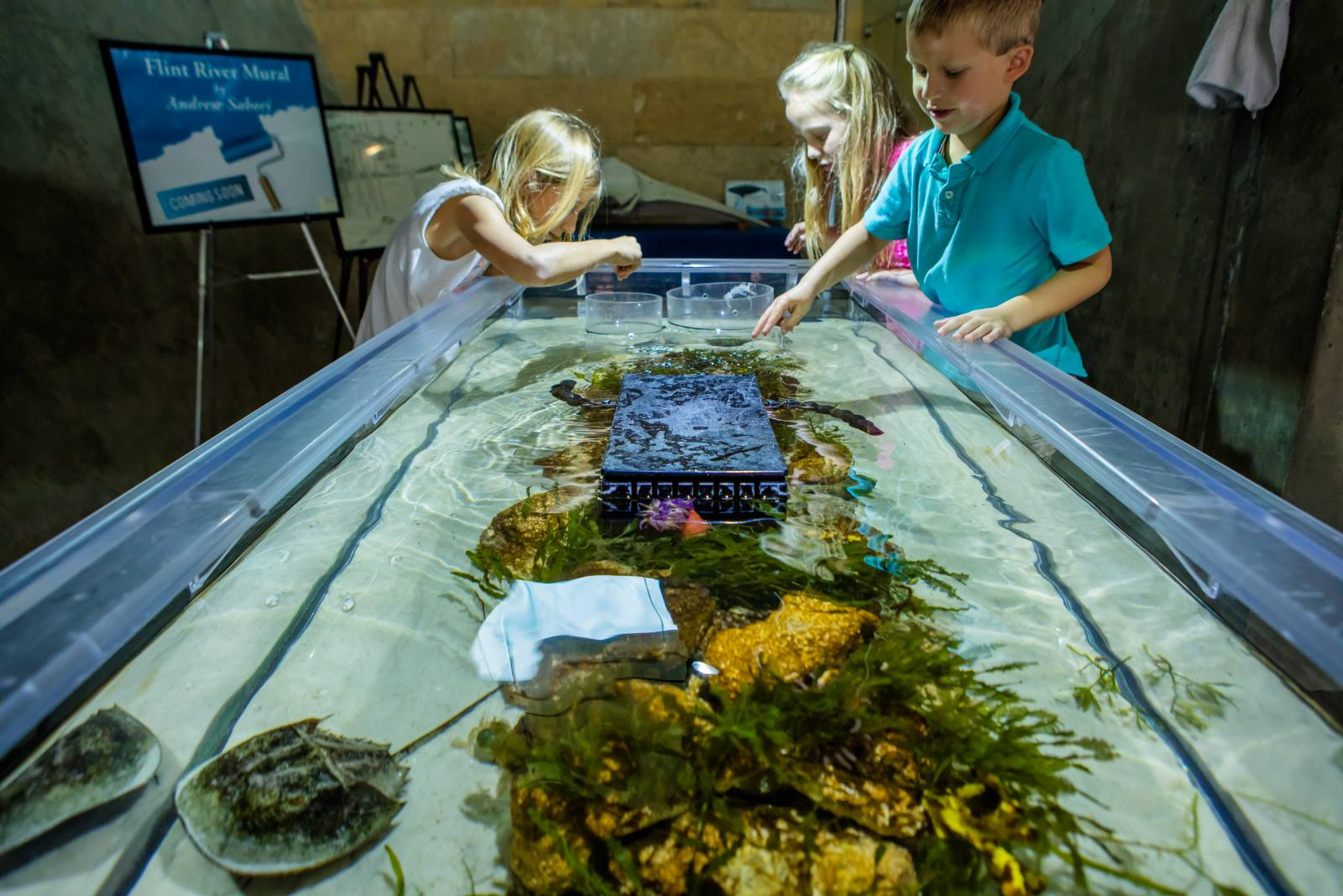 Summer Camp: Ocean Commotion