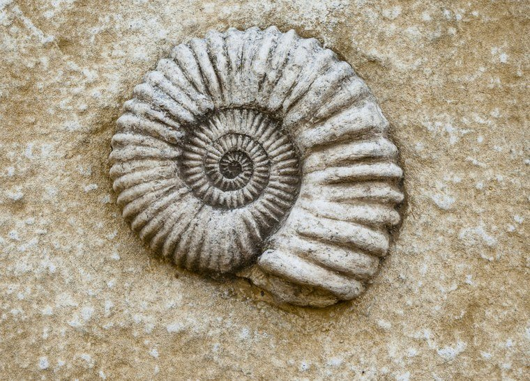 "Discovery Days-""Fossil February"""