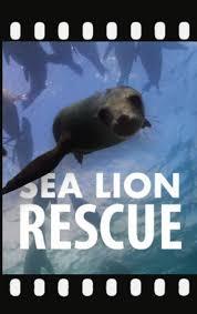 Imagination Theater- Sea Lion Rescue